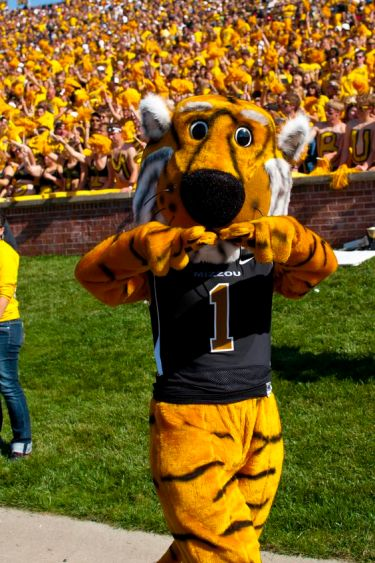 Missouri mascot Truman the Tiger roams the sidelines in front of a sea of gold at a Mizzou game.: