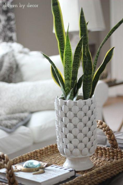 planta de serpiente - plantas para purificar el aire