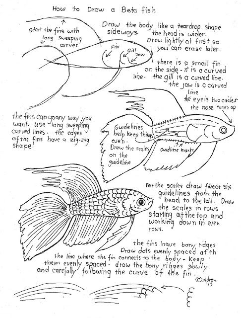How to draw a beta fish work sheet and lesson. It is easy