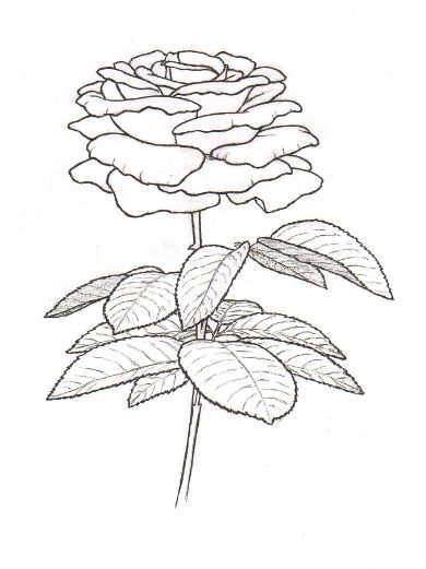 Flower coloring pages, Flower embroidery and Embroidery