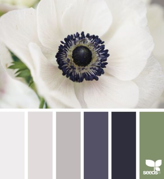 flora hues | design seeds | Bloglovin':