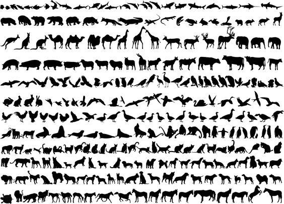 Animals, Design patterns and Wire on Pinterest