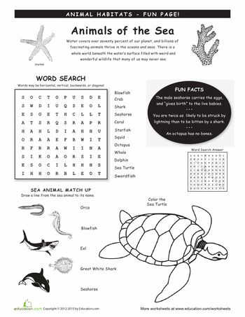 Worksheets Fourth Grade Ecosystem Ocean. Worksheets. Best