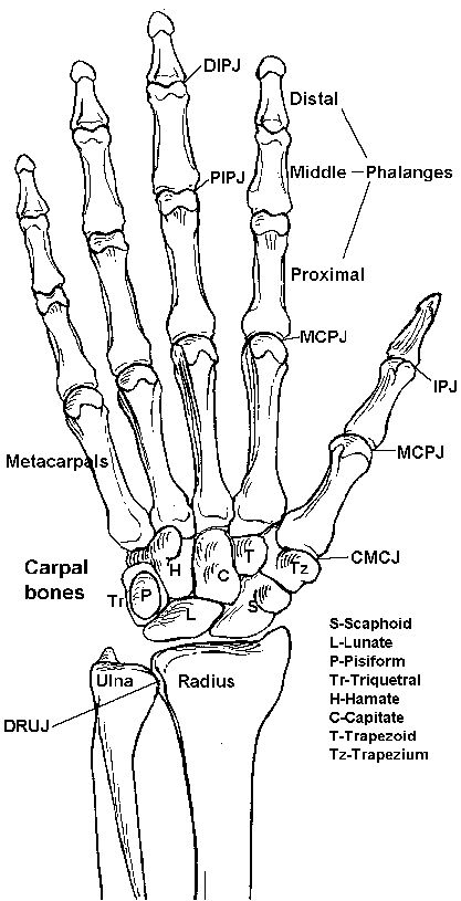 Radiology, Anatomy and Motivation on Pinterest