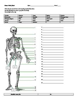 Human anatomy, Homework and Worksheets on Pinterest