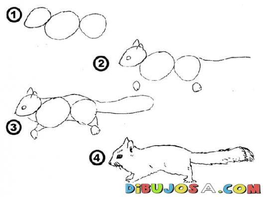 Como Aprender A Dibujar Una Ardilla En 4 Pasos Para Pintar