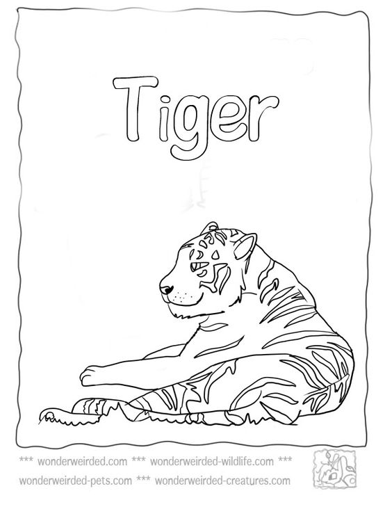 Coloring pages, Cute tigers and Coloring on Pinterest