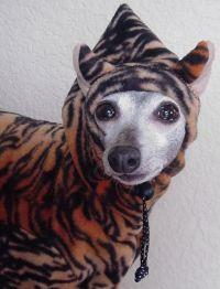 tiger dog costume   Dog Costumes   Pinterest   Dog ...