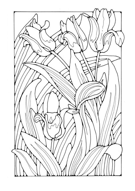 Coloring Page Tulips Flower Coloring Pages Pinterest