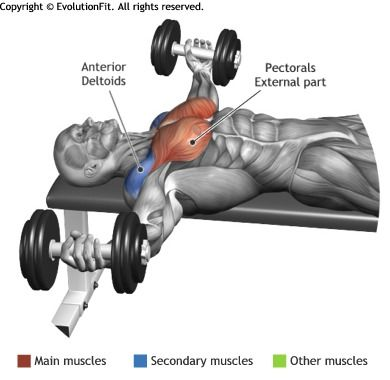 Chest muscles Gym and Muscle on Pinterest