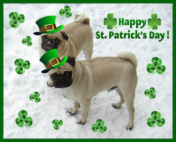 Cute Wallpaper St Pattys Day Pupppy St Patrick S Day Meme St Patrick Day Pugs Pug Love