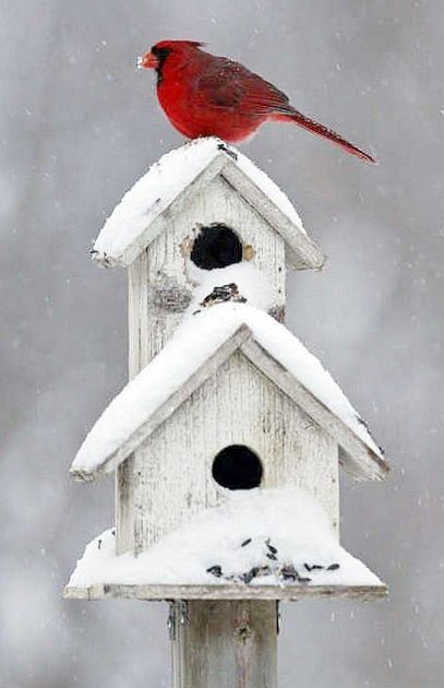 White snowy bird house and red cardinal  Home tweet Home