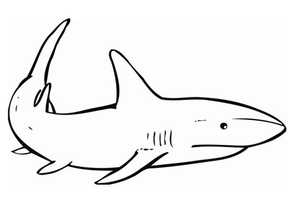 Sharks, Coloring and Coloring pages on Pinterest