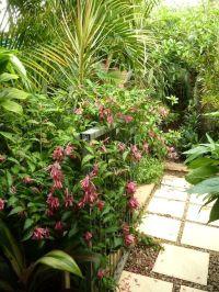 Temperate climate tropical garden | GardenDrum Tropical ...