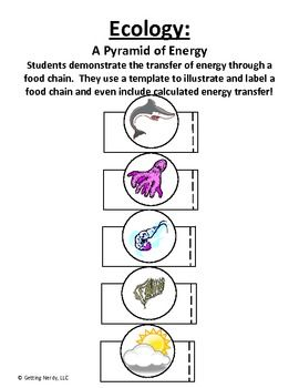Ecology, Food chains and Paper models on Pinterest