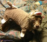 Sock Monkey Dog Costume | Costumes, Dog costumes and Sock