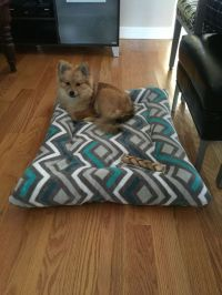 Diy dog bed with old pillows and $5 Walmart blanket | Pet ...