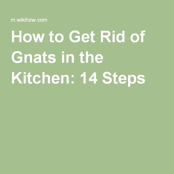Get Rid of Gnats in the Kitchen  How to get rid The o