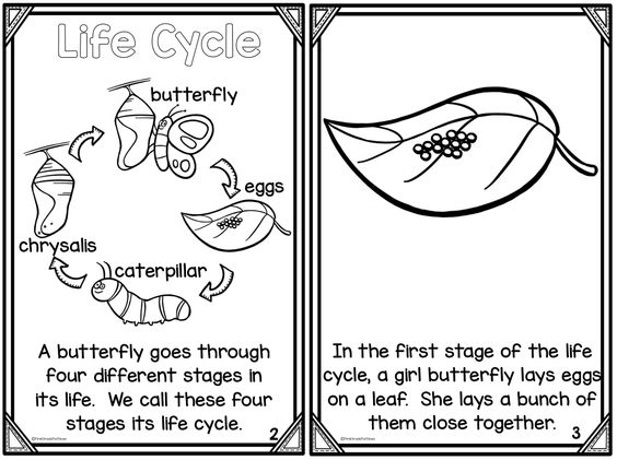 Butterfly life cycle, Life cycles and Comprehension on