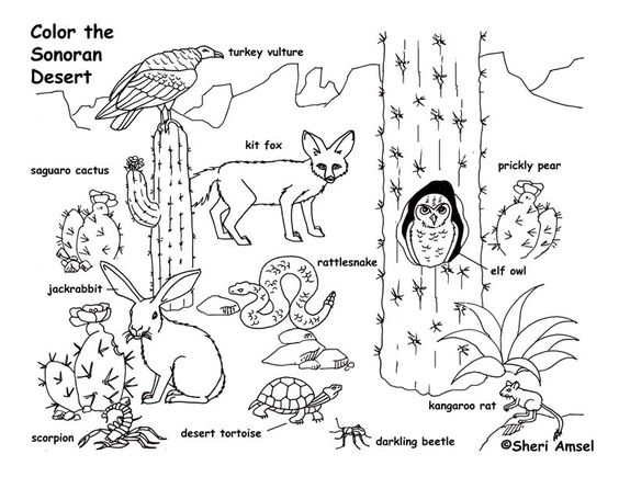 Desert animals, Animal coloring pages and Coloring pages
