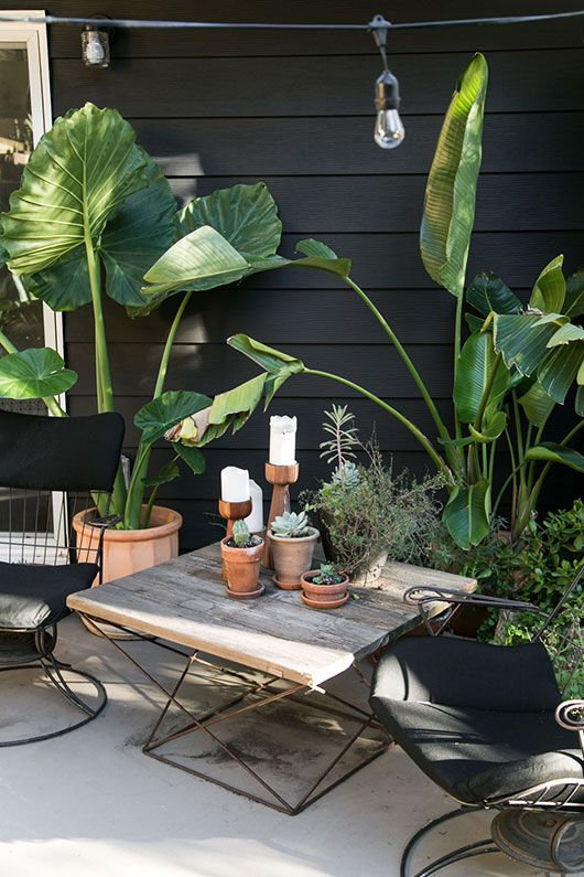 my black and white back patio with greenery / sfgirlbybay: