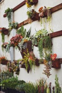 Succulent wall, Succulent wall gardens and Wall gardens on ...