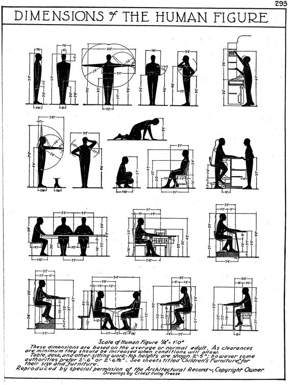 Human Measurements, dimensions for the human figure