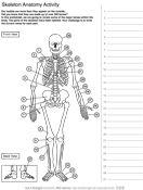 Activities, Biology and Skeleton anatomy on Pinterest