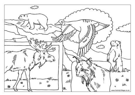 North American Animals Coloring Pages Canadian animals