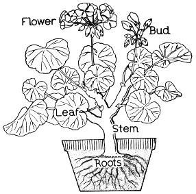 Photosynthesis, Coloring pages and Botany on Pinterest