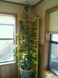 Old shutter door turned indoor ivy trellis. | Home Design ...