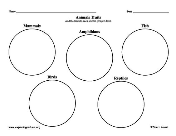 Graphic organizers, Animals and Graphics on Pinterest