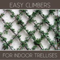 Great plants for your indoor trellis designs. | Helpful ...