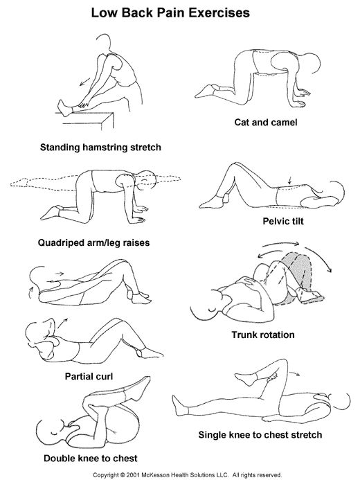 Exercises For Low Back Pain Sports Medicine Advisor 2003.1