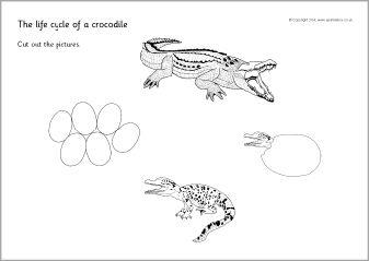 cricket life cycle diagram electrical motor control wiring diagrams of new era crocodile cut and stick sb10575 sparklebox printable