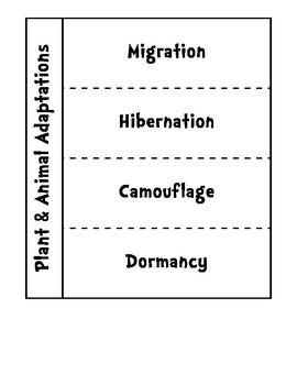Plant And Animal Adaptations Flap Book Hibernation