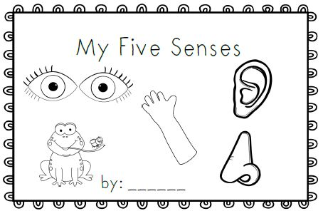 Emergent readers, Bees and My five senses on Pinterest
