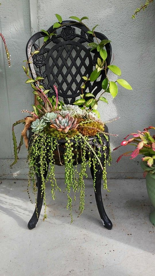 Succulent Chair by Mario Reyes: