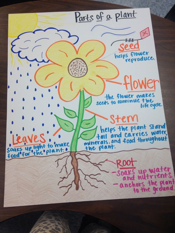 diagram of a flowering plant with label 2001 honda prelude wiring parts anchor chart | teaching pinterest charts, charts and plants