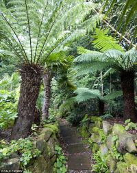 The best ideas about Tree Ferns Garden, Fern Gardens and ...