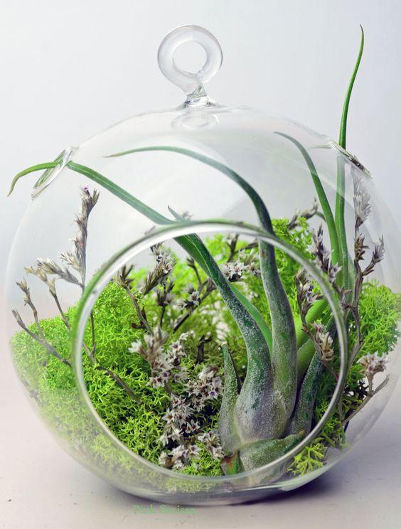 Air Plant Terrarium Hanging Glass Terrarium Green Reindeer