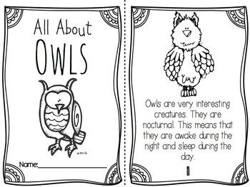 All About Owls- science vocabulary, writing, literacy and
