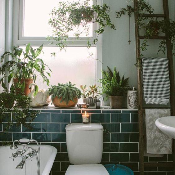 Decorare con le piante: quali coltivare in bagno? | Guida Giardino