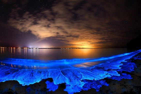 Blue Lace - Bioluminescence, Jervis Bay, NSW, Australia by Joanne Paquette Photography