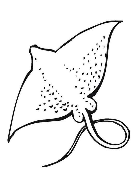 Animal coloring pages, Coloring pages and Animals on Pinterest