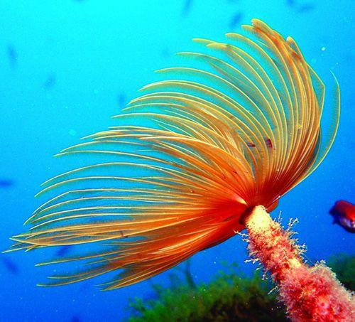Fungi in the Ocean in the ocean most animal waste falls