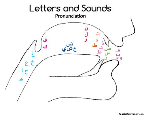 arabicway: This drawing shows where the sounds should come