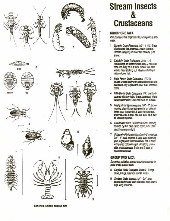 Insects, Teaching and Keys on Pinterest
