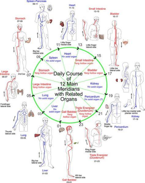 Evolution of Consciousness | MERIDIANS: