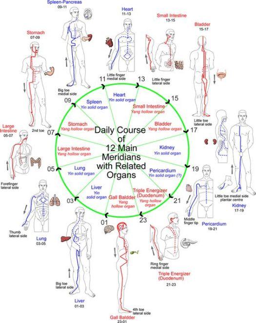 Evolution of Consciousness   MERIDIANS: